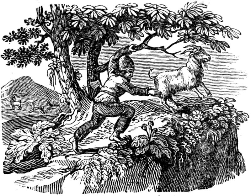 Селкирк ловит козу