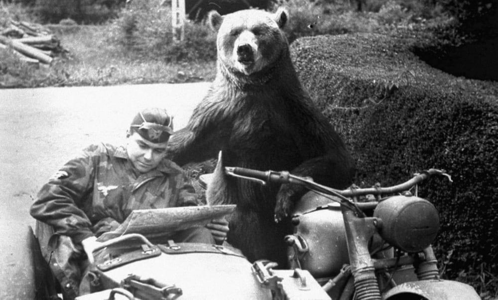 Медведь на службе в армии