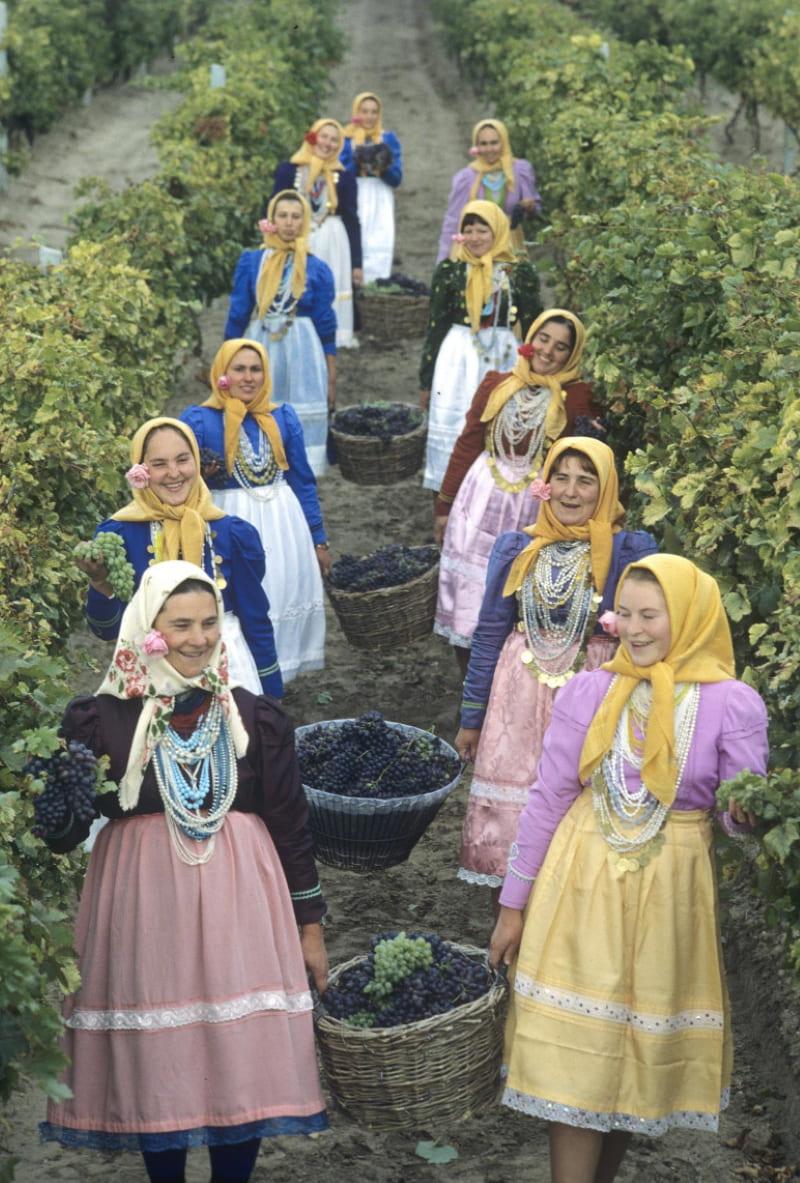Сбор винограда в молдавском селе, 1982 / Ю. Лизунов / Sputnik