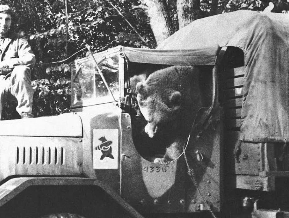 Войтек - медведь в польской армии